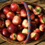 Earth Pilgrim – Satish Kumar – ein Apfelsamen gibt mir 10.000% Zinsen